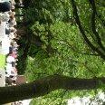 Picknick im Park 2011
